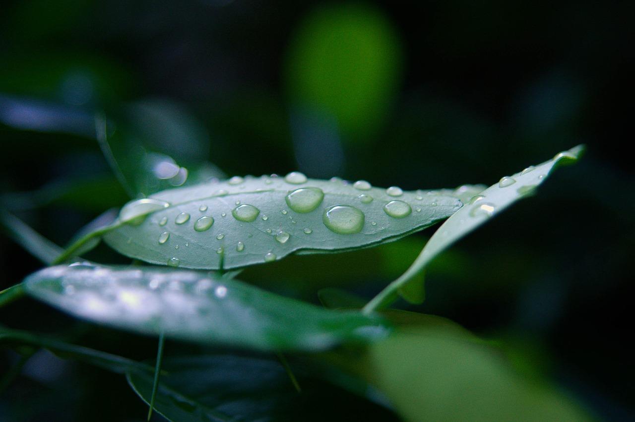 В Крыму местами дожди: прогноз погоды до конца недели
