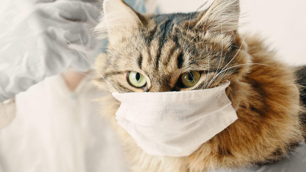 В России у кошки обнаружили коронавирус