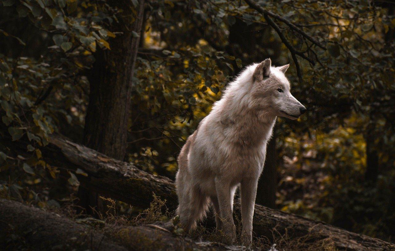 Ученые оценили возраст найденных в крымской пещере «Таврида» древних волков