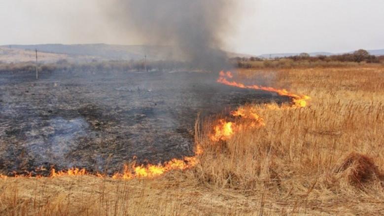 Поле пшеницы загорелось в Крыму