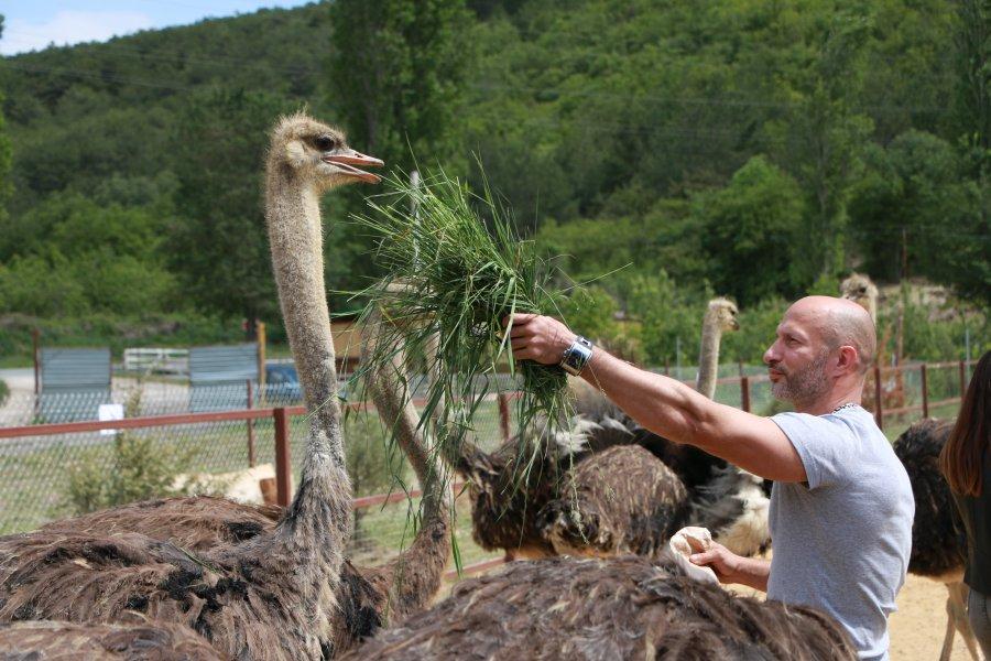 Первую страусиную ферму создали в Севастополе