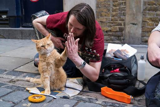 В Великобритании умер известный на весь мир уличный кот Боб