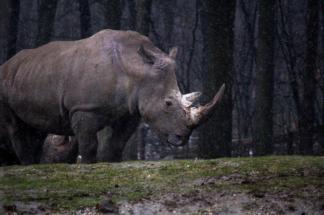 В пещере «Таврида» обнаружены останки древнего носорога возрастом не менее 1,5 млн лет