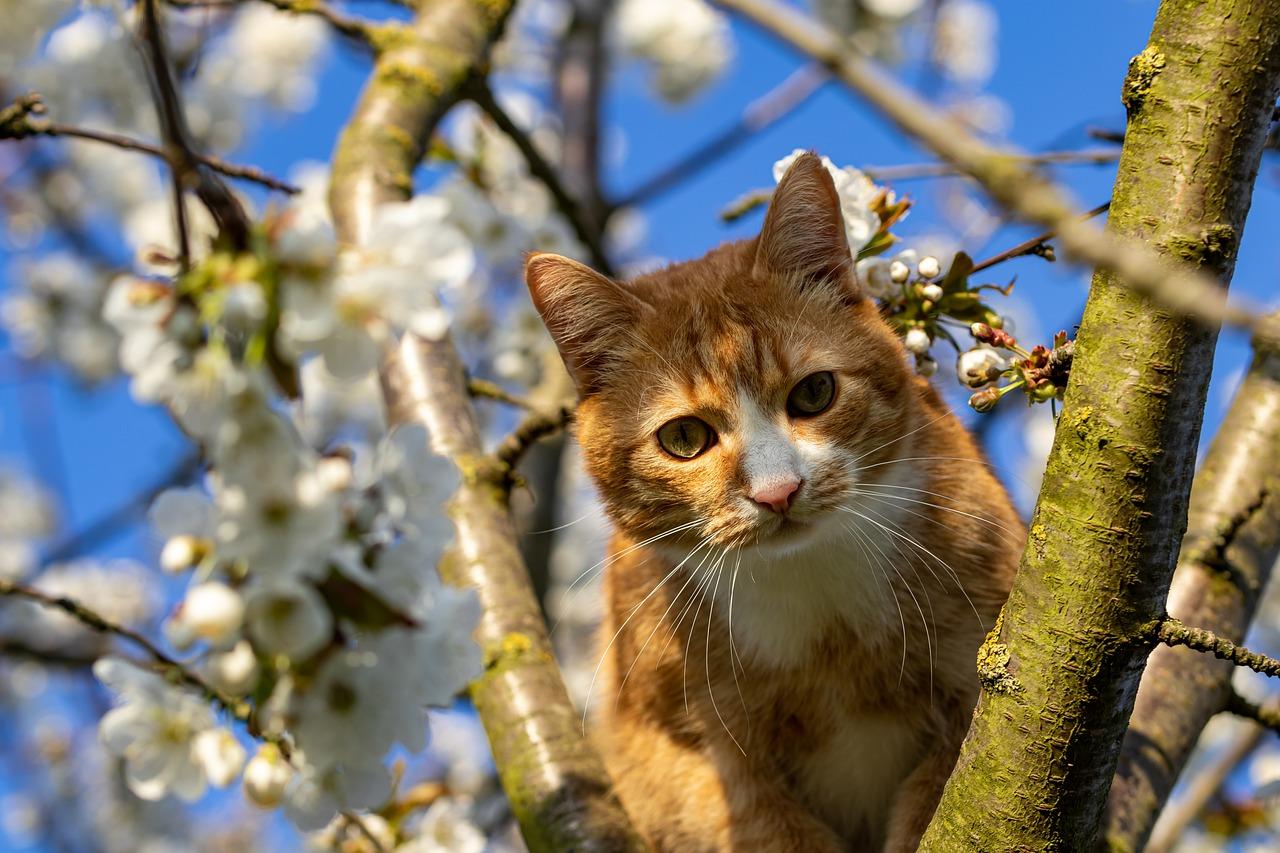 С дерева в Крыму снимали женщину с котом