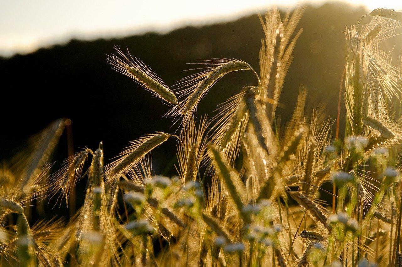 Неделя в Крыму начнется с дождей и гроз (прогноз погоды на 27 – 29 июля)