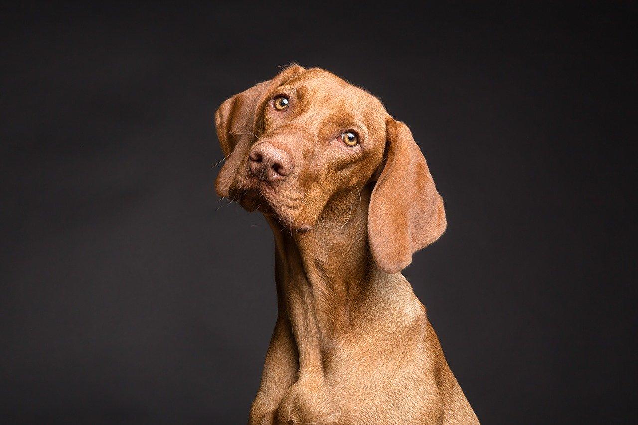 В ГД предложили запретить коллекторам изымать домашних животных