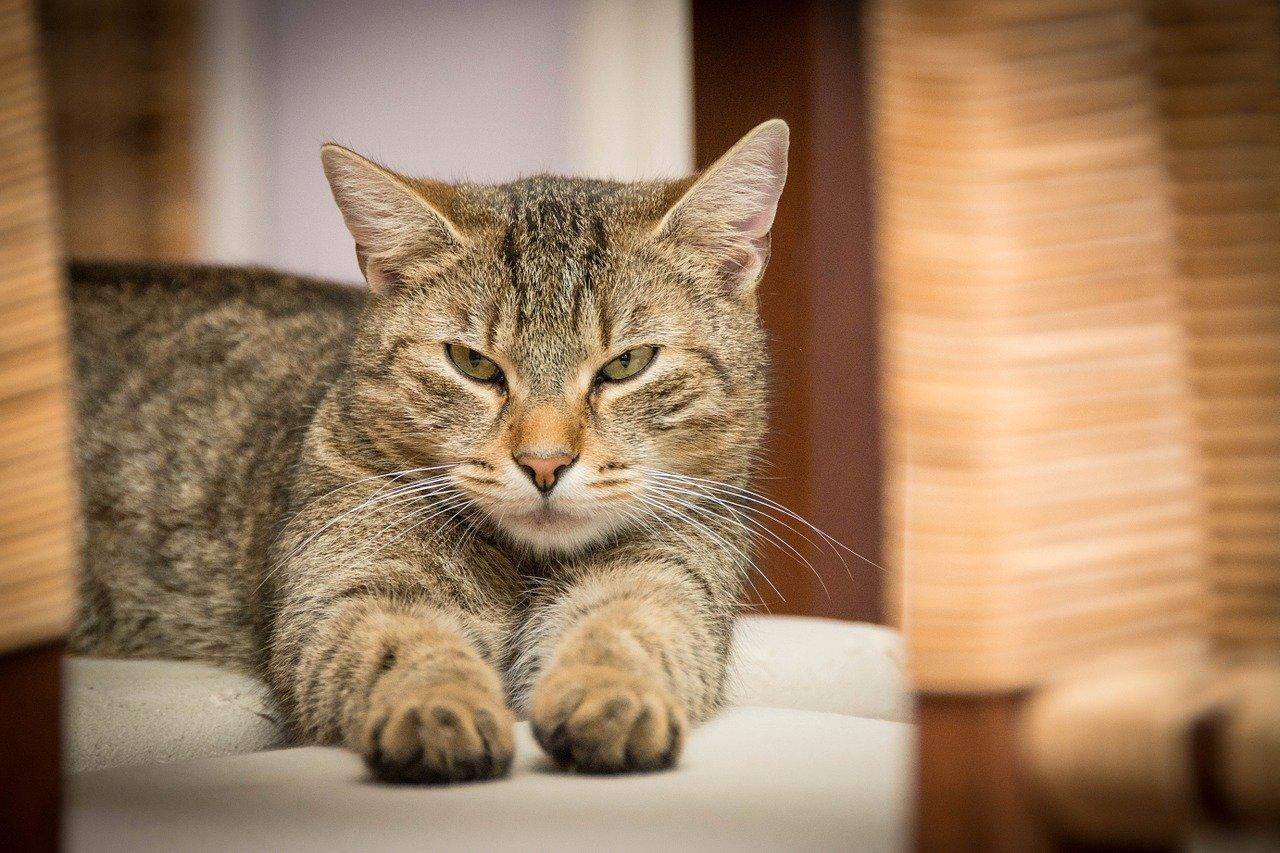 В Крыму на 10 суток «арестовали» кота-дебошира