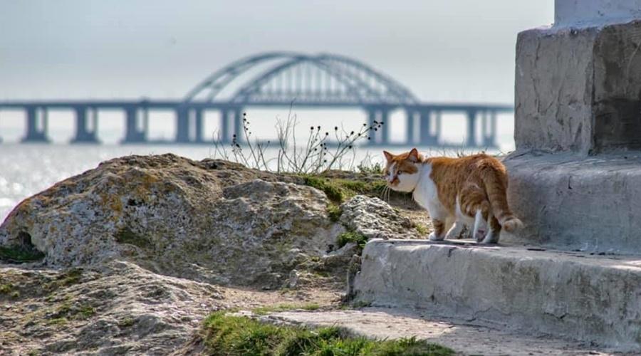 Символ Крымского моста кот Мостик переезжает