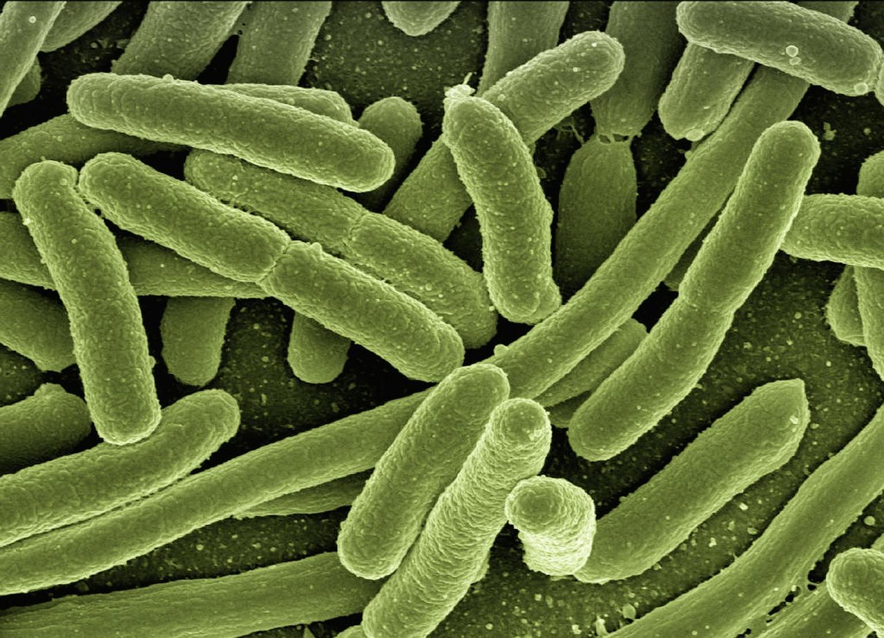 Ученые расшифруют генетический код найденных в пещере «Таврида» микроорганизмов