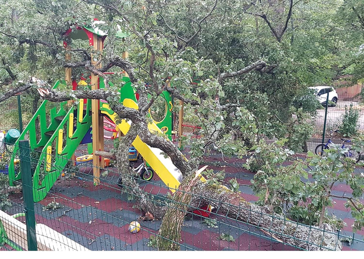 На детскую площадку под Ялтой рухнуло дерево
