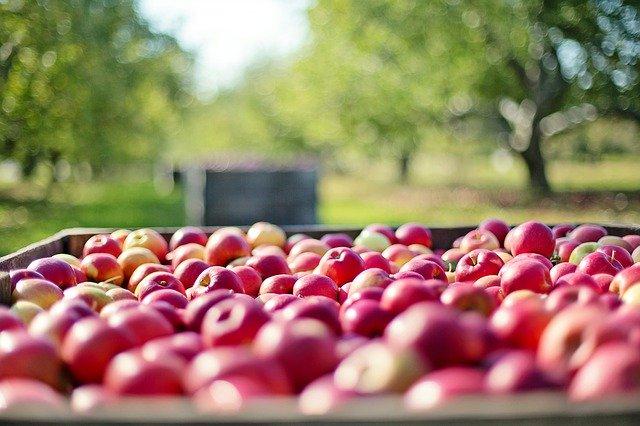 Роспотребнадзор предупредил об опасной диете с использованием яблок