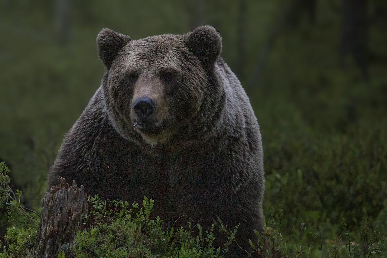В Сочи два медведя загрызли зашедшего в вольер 11-летнего мальчика