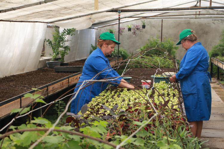 В Севастополе создаются временные рабочие места