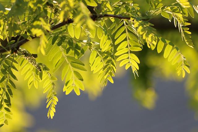 В Крыму сохранится сухая и жаркая погода (прогноз на 25 – 27 августа)