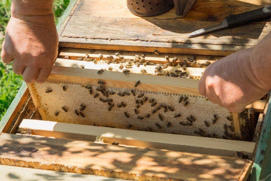 В Севастополе развивается отрасль пчеловодства