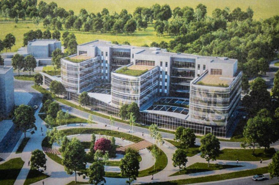 В Севастополе вырубят деревья под строительство больницы