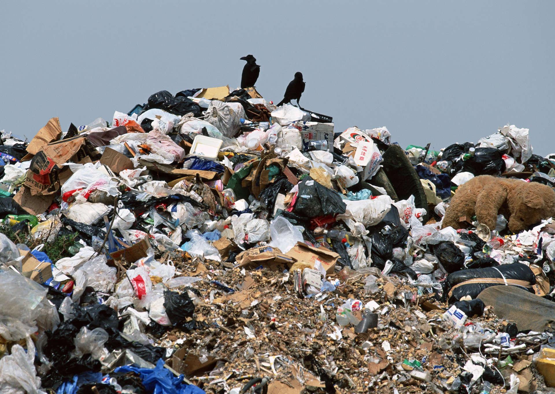 Петербург может стать единственным субъектом, который не смог провести мусорную реформу