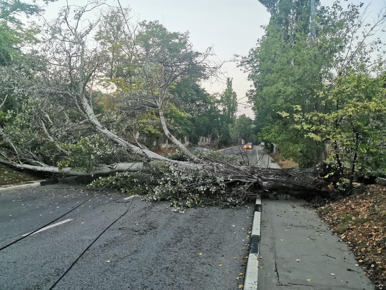 Упавшее на дорогу дерево заблокировало выезд из Севастополя