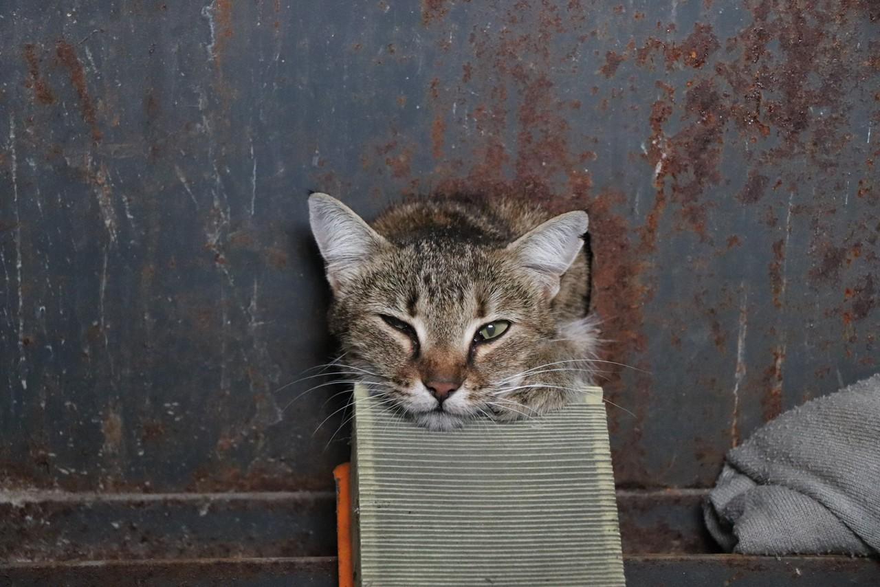 Пятеро севастопольских спасателей освобождали застрявшую в электрощитке кошку