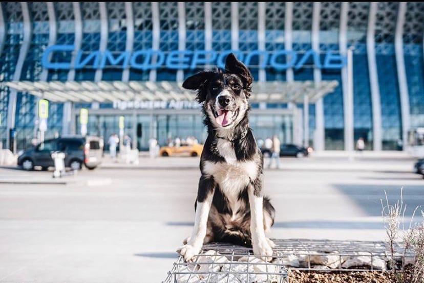Аэропорт «Симферополь» переходит на осенне-зимнее расписание