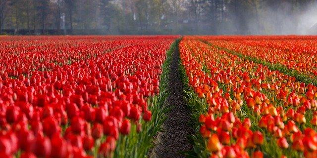 Краснодарский предприниматель поставит в Севастополь цветов на 2,4 млн рублей
