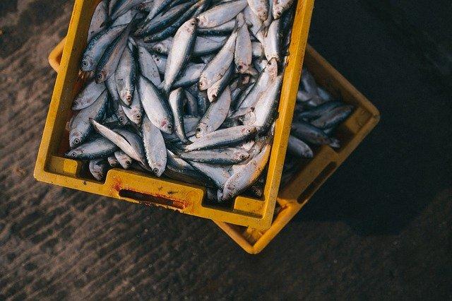 В Крыму до февраля запретили ловить рыбу в Черном море