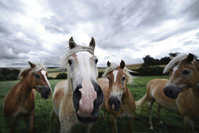 Пропавших людей в Севастополе ищет конный патруль