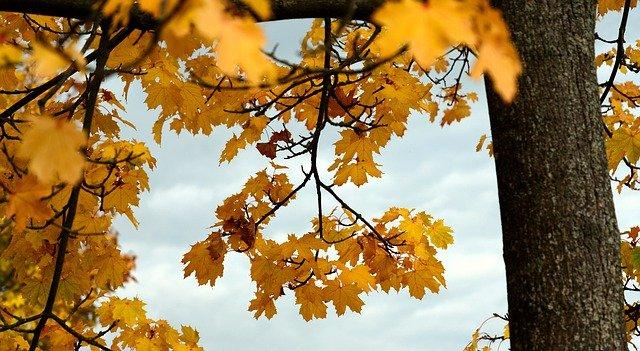 В пятницу и на выходных на полуострове будет господствовать золотая осень (прогноз погоды)