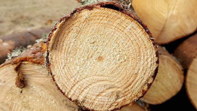 В России ужесточили ответственность за незаконный вывоз лесоматериалов