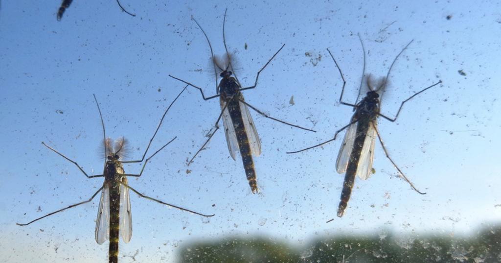 Восточный Крым атаковали «беззубые» комары из Краснодара