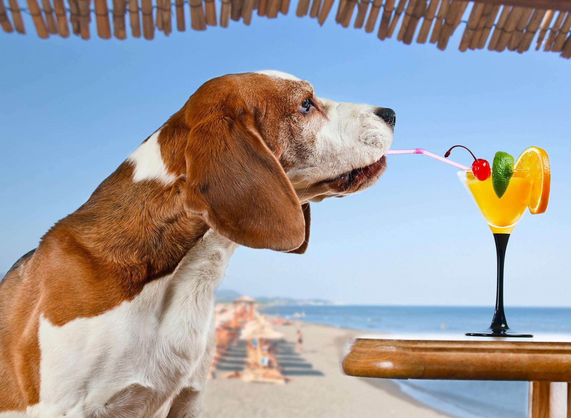 Россиянам запретили брать на пляж животных