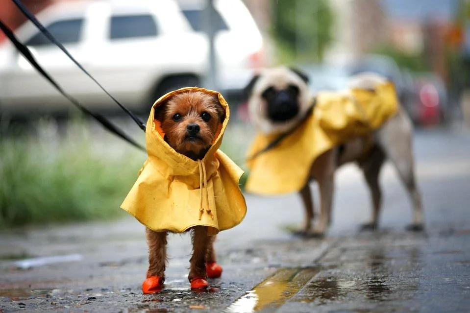 В Севастополе на выходных ожидаются дожди