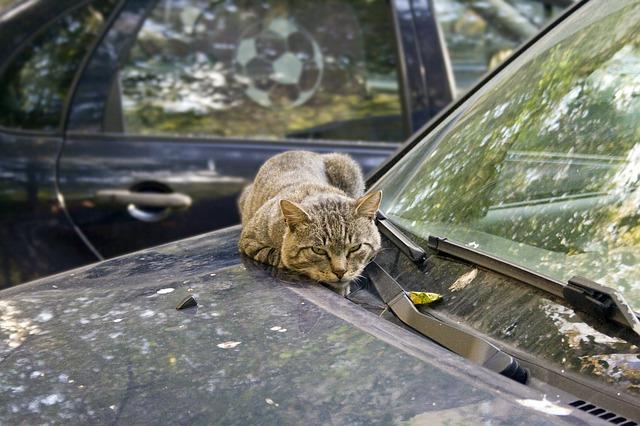 Бездомный кот чудом не погиб, катаясь по Крыму под капотом автомобиля