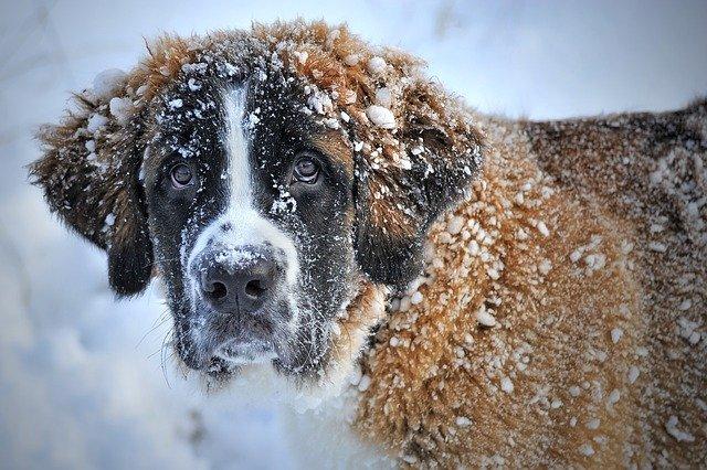 На Ай-Петри пошел первый снег