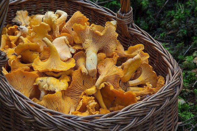 Сотрудники МЧС просят крымчан быть внимательными при сборе грибов