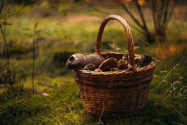 38 севастопольцев в эту осень отравились грибами