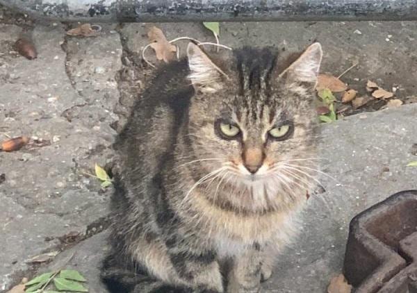 «Демон!»: Жителей Ялты удивил кот с необычным окрасом