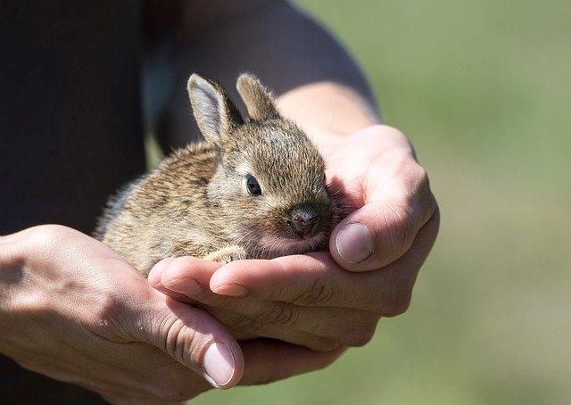 Крымскую вакцину от коронавируса начали испытывать на кроликах