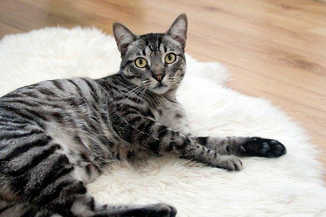 Коты из Эрмитажа получили наследство из Франции