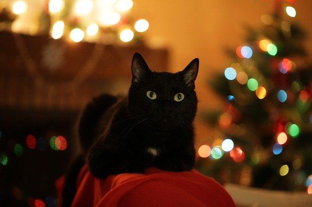 Эксперт напомнил о смертельно опасных новогодних украшениях