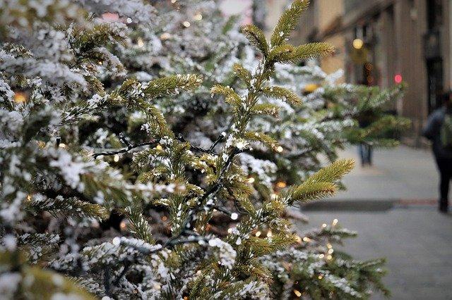 В Роспотребнадзоре рассказали, как выбрать новогоднюю елку