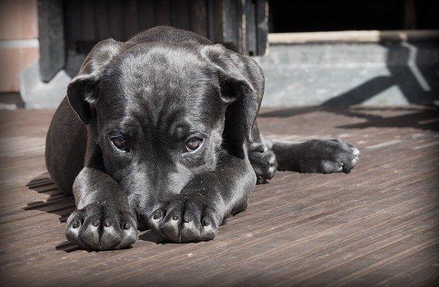 В Севастополе будут контролировать приюты для собак
