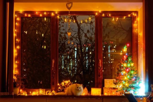 За наряженные новогодние окна севастопольцам подарят толстовки с котиками