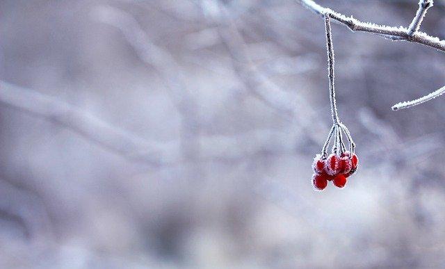 Синоптики рассказали о причинах исчезновения настоящей «русской зимы»