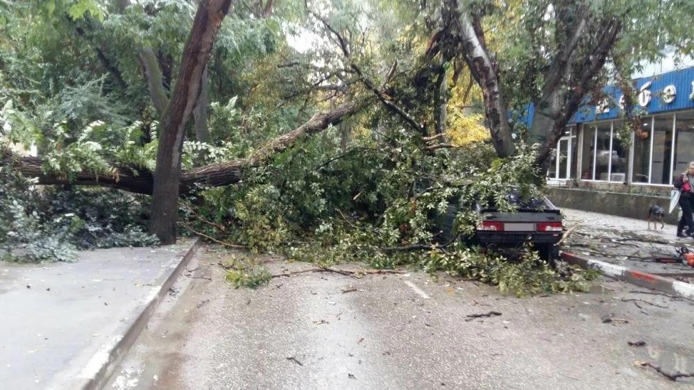 В Симферополе упавшее дерево раздавило автомобиль