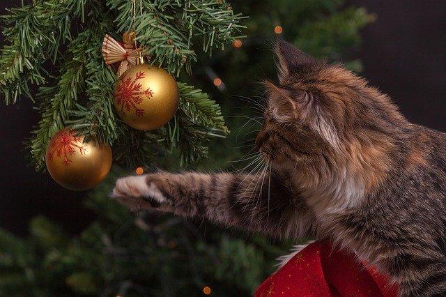 31 декабря в Крыму объявили выходным днем