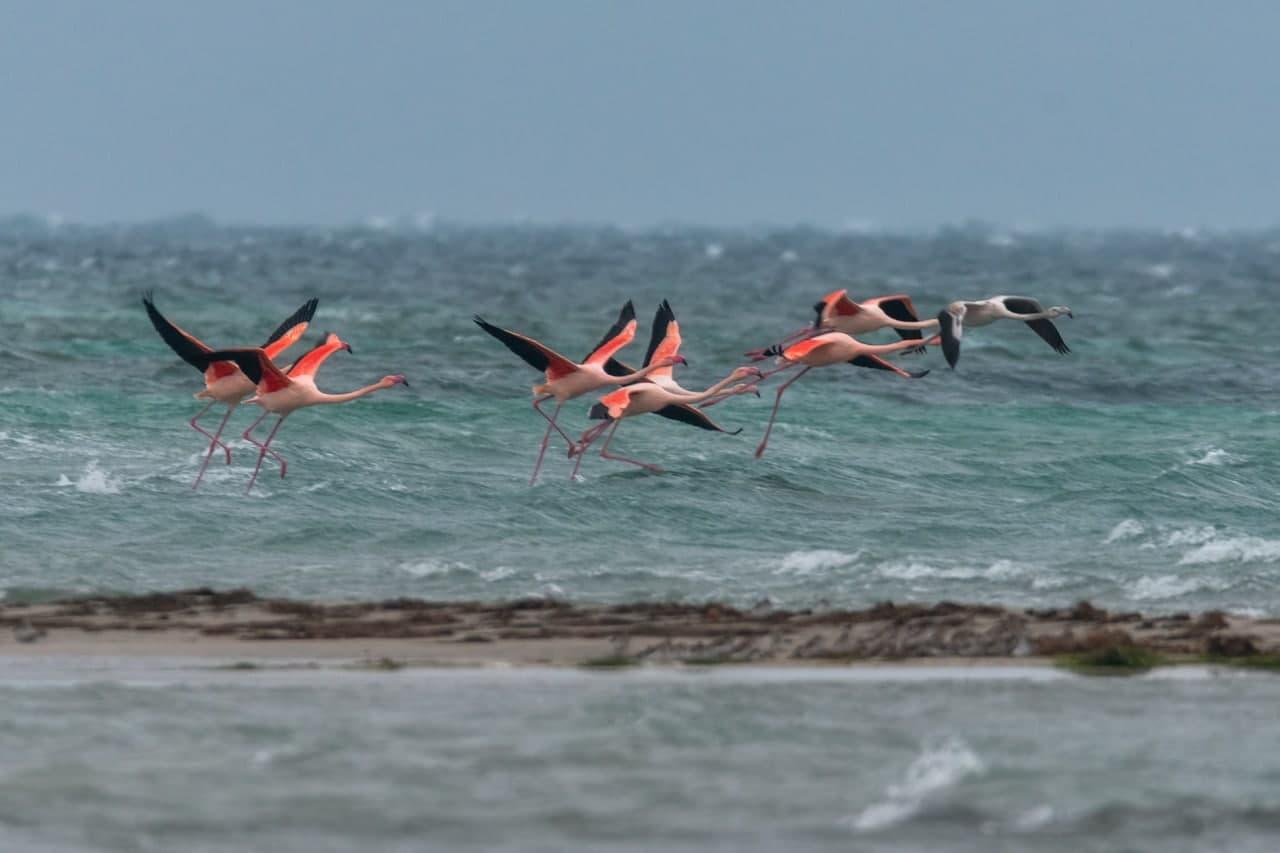 Розовые фламинго облюбовали Крым