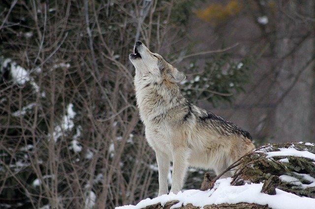 В Крыму требуют возбудить дело против мужчины, избившего волка