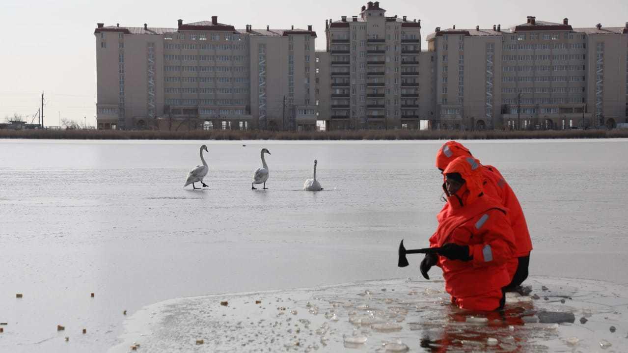 Лебеди попали в ледяной плен на озере Сасык-Сиваш в Крыму