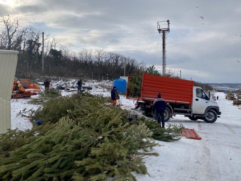 В Севастополе началась переработка елок для натурального удобрения